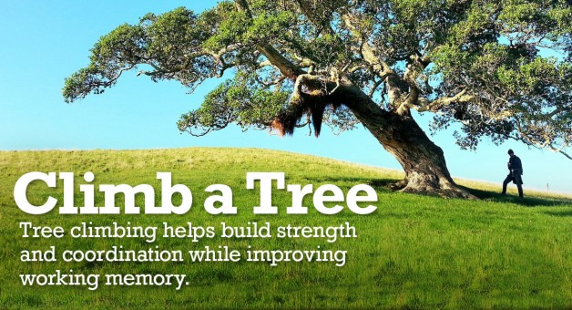 Tree climbing helps build strength and coordination while improving working memory.