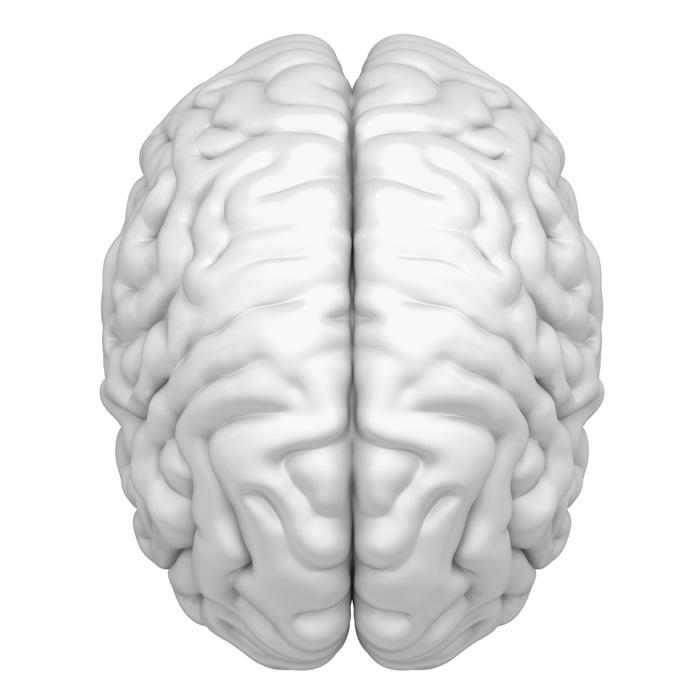 Brain Atrophy: Can It Be Reversed? - University Health News