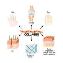 collagen benefits