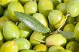 Olive Leaf Benefits: High Blood Pressure Supplement and More