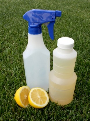 Safe DIY Pest Control & Weed Repellants