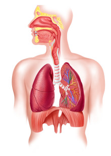 COPD Guidelines: Basic Treatment and Care Options