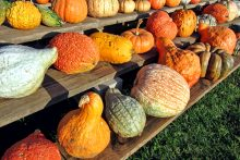 The Benefits of Fall Produce