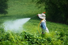 Are Pesticides Harmful? Pesticides on Food May be What Causes Low Sperm Count in Some Men