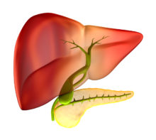 Gallstones and Gallbladder Pain Pose Potential Problems for Seniors