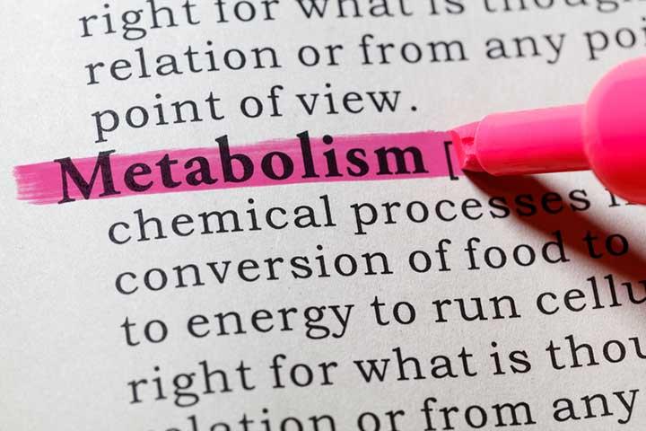 metabolism