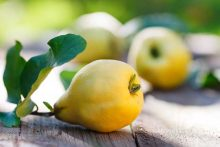 Quince Fruit: Fall's Best-Kept Secret