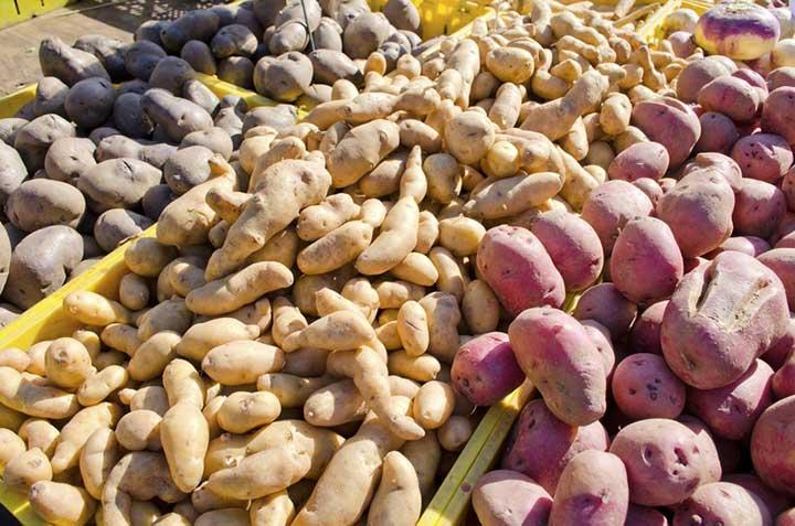 sweet potatoes vs. potatoes