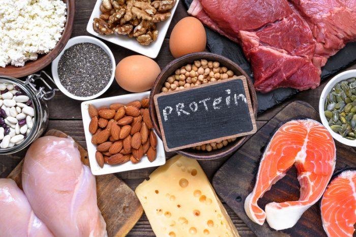 plant protein vs. animal protein