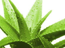 Aloe vera is one natural Ulcerative Colitis treatment